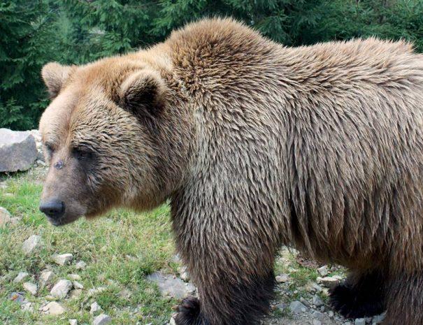 Medvepark Alsószinevér közelében